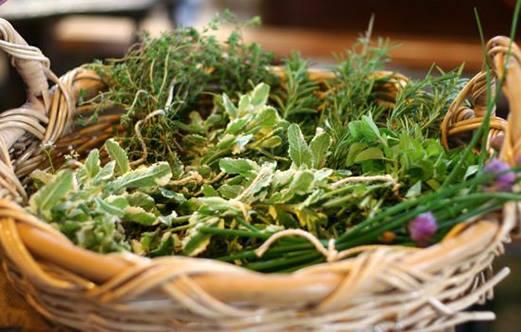 Le erbe selvatiche: riconoscerle e utilizzarle