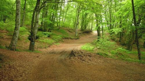 Sabato 17 ottobre: Camminata Meditativa nei boschi di Monte Fogliano