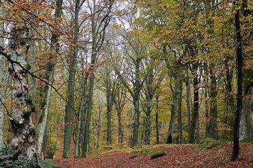 Riserva Naturale Lago di Vico – Monte Fogliano e la Via Francigena