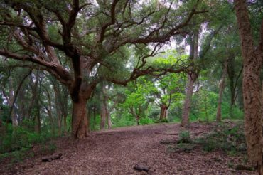 Domenica 2 febbraio: Riserva Naturale di Monte Catillo