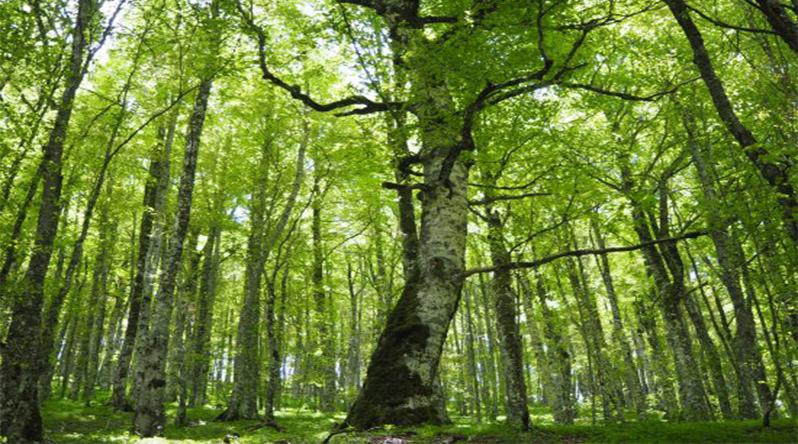 Parco Regionale Bracciano-Martignano, la Faggeta di Monte Raschio