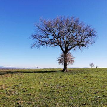 domenica 7 febbraio: cammino e pratiche di consapevolezza nel Parco Regionale di Veio